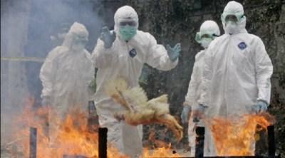 Les pandémies mortelles à surveiller en 2014