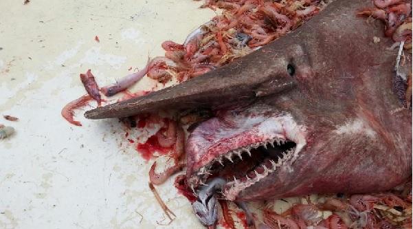 Il trouve un requin immonde dans ses filets