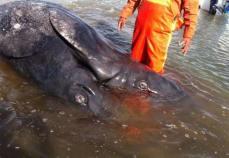 baleine-mutante-3