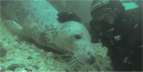 Des plongeurs émerveillés par des bébés phoques