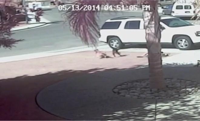 Un chat sauve un enfant des crocs d'un chien