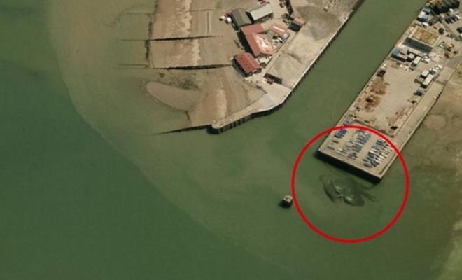 Un crabe épouvantable aperçu dans un port anglais