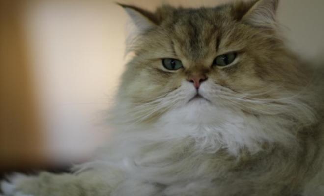 Dix ans après, le chat retrouve ses maîtres