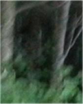 Un des petits entre les arbres
