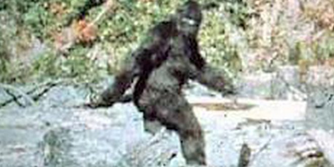 Le Bigfoot
