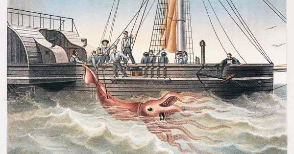 Le calmar géant de Jules Verne aperçu au Japon