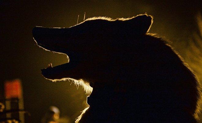 Des Britanniques partent à la chasse au loup-garou