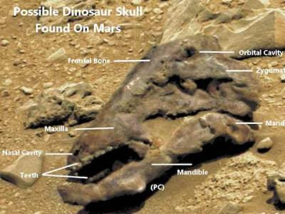 Un crâne de dinosaure trouvé sur Mars
