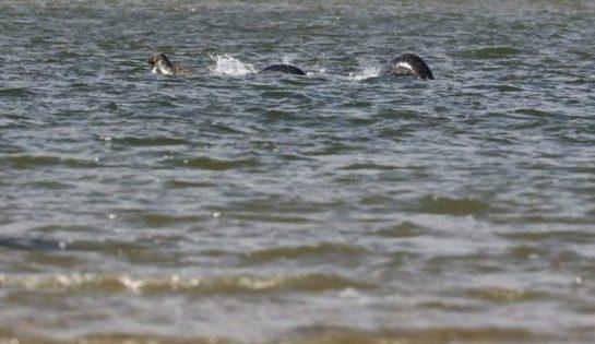 Une photo convaincante du monstre du Loch Ness