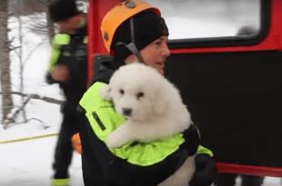 Avalanche en Italie: trois chiots sauvés par les carabiniers