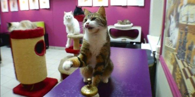 Ce chat pétersbourgeois est un véritable mathématicien!