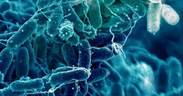 D'étranges bactéries apparaissent de nulle part après une éruption volcanique