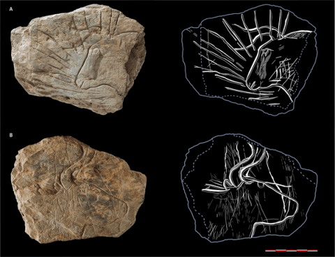 Une exceptionnelle découverte d'art rupestre vieux de 14000 ans en Bretagne