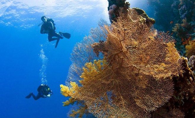 Les plongeurs font état de sons effrayants dans les profondeurs de la mer Rouge