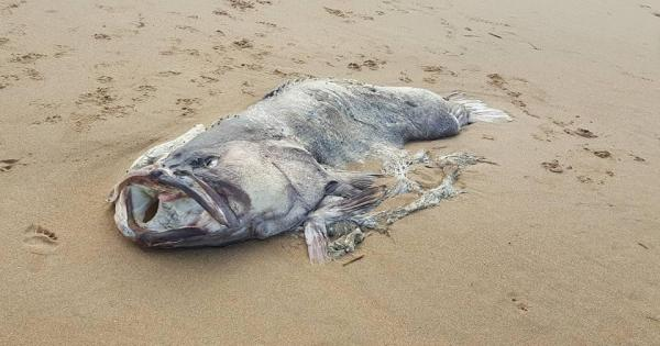 Ce poisson qui s'est échoué est inconnu