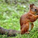 Un écureuil joue un tour de cochon à un habitant du Michigan