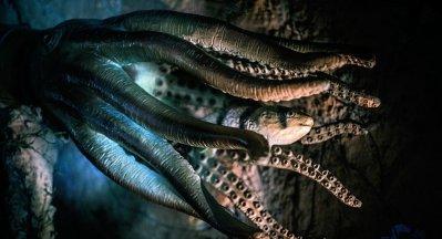 «Jamais rien vu de tel»: une vidéo avec des monstres sous-marins stupéfait des biologistes