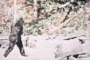 La célèbre vidéo du Bigfoot de 1967 remasterisée à une résolution plus élevée – elle révèle de nouveaux détails 12 juillet 2019 Emmanuel FacebookTwitterPinterestWhatsAppTumblrEmailVKPartager La célèbre vidéo du Bigfoot de 1967 remasterisée à une résolution plus élevée