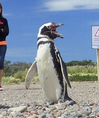 """Pinguim diz: """"Não esqueçam, curtam e compartilhem!"""""""