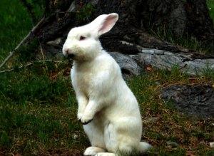 Um dos coelhinhos presentes no bosque da Aldea Nevada
