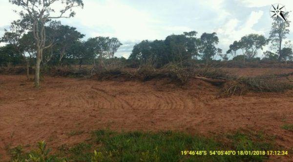 Operação Cervo do Pantanal faz cerco a desmatamentos ilegais