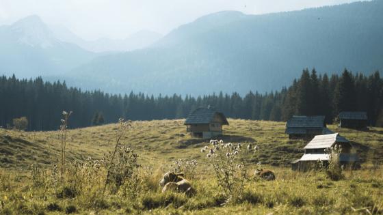 Turismo rural:  oportunidade para expansão de ganhos