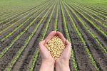 Preços dos alimentos atingem nível mais alto desde 2014, diz a ONU