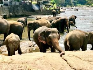 Kandy. Sri Lanka.