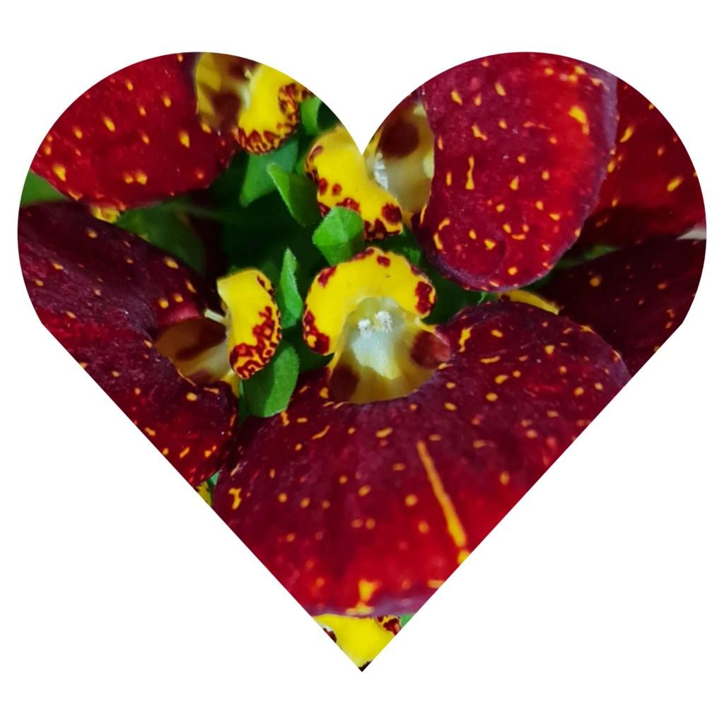 Reconectarea la Iubirea de sine,Încrederea în sine,Iubirea de sine,Idei pentru a fi fericit,Implementare de programe pozitive,Reguli ale dragostei,Etape de conectare cu Sinele Divin,Ai grijă de energia ta! ,Iertarea,mulţumirea sufletească si devotamentul,Nu te mai regăsești în relație?,Ce înseamnă o relație conștientă?,Crearea unor relații echilibrate