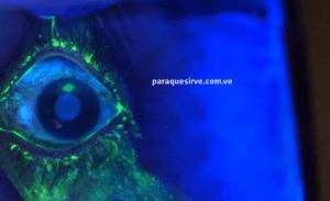 como curar el mal de ojo