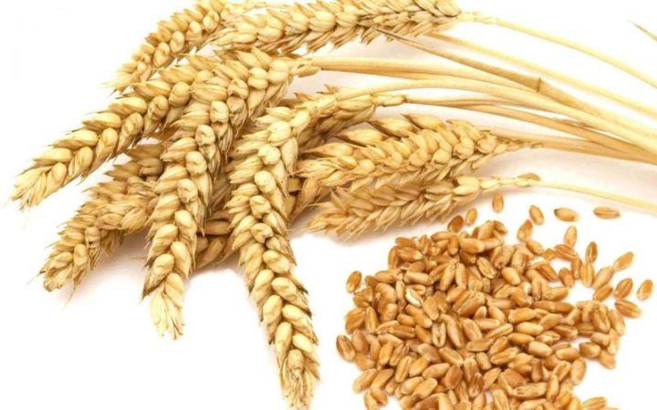 gendum gandum biji Makanan untuk mengecilkan perut buncit diet