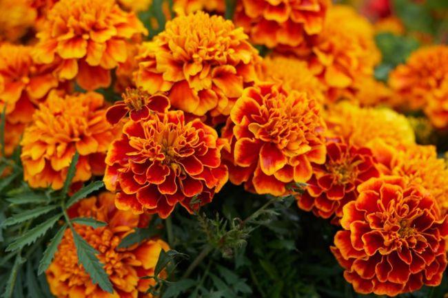Gambar bunga cantik dan indah