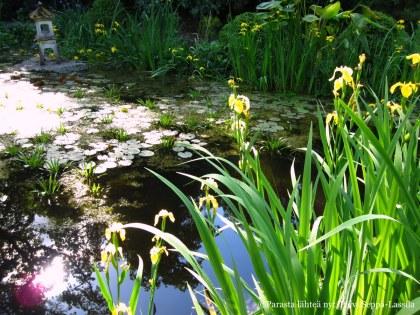 Kasvitieteellisen puutarhan pieni lampi.