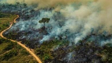 Photo of Pará completa 15 anos como líder em queimadas e desmatamento