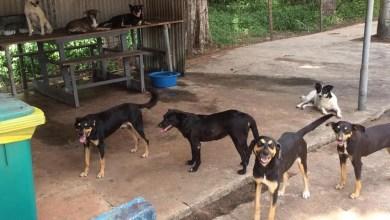 Photo of Novo diretor da Companhia das Docas do Pará expulsa oito cães que viviam no  Terminal de Miramar