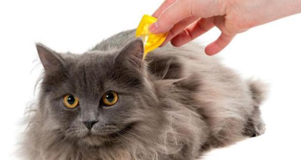 Стронгхолд для кошек - инструкция по применению препарата