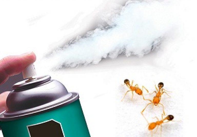 Откуда в доме появляются прозрачные муравьи и как избавиться от них. Откуда берутся домашние муравьи в квартире или доме? Как заводятся, где обитают, как с ними бороться