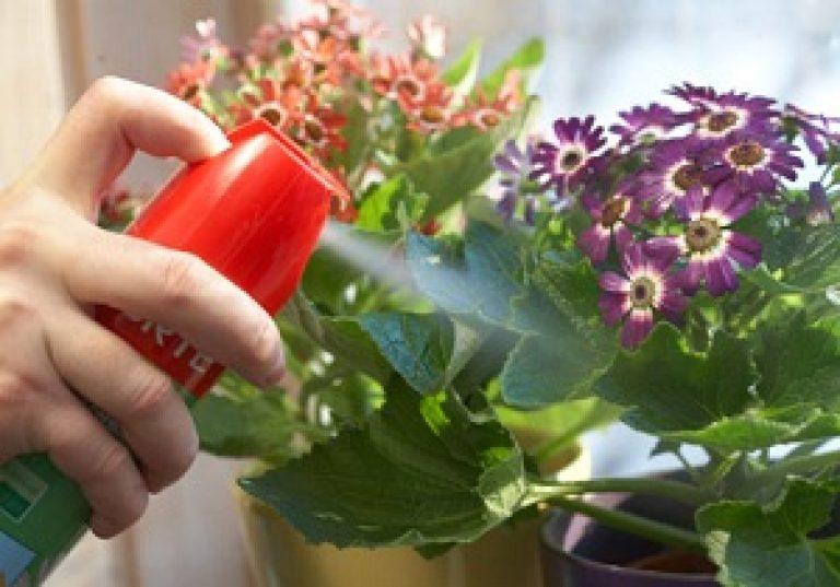gyógynövények a beltéri növények parazitáira
