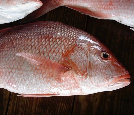 American Psycho Part 3: how to prep and cook red snapper