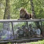 Zoo de Thoiry