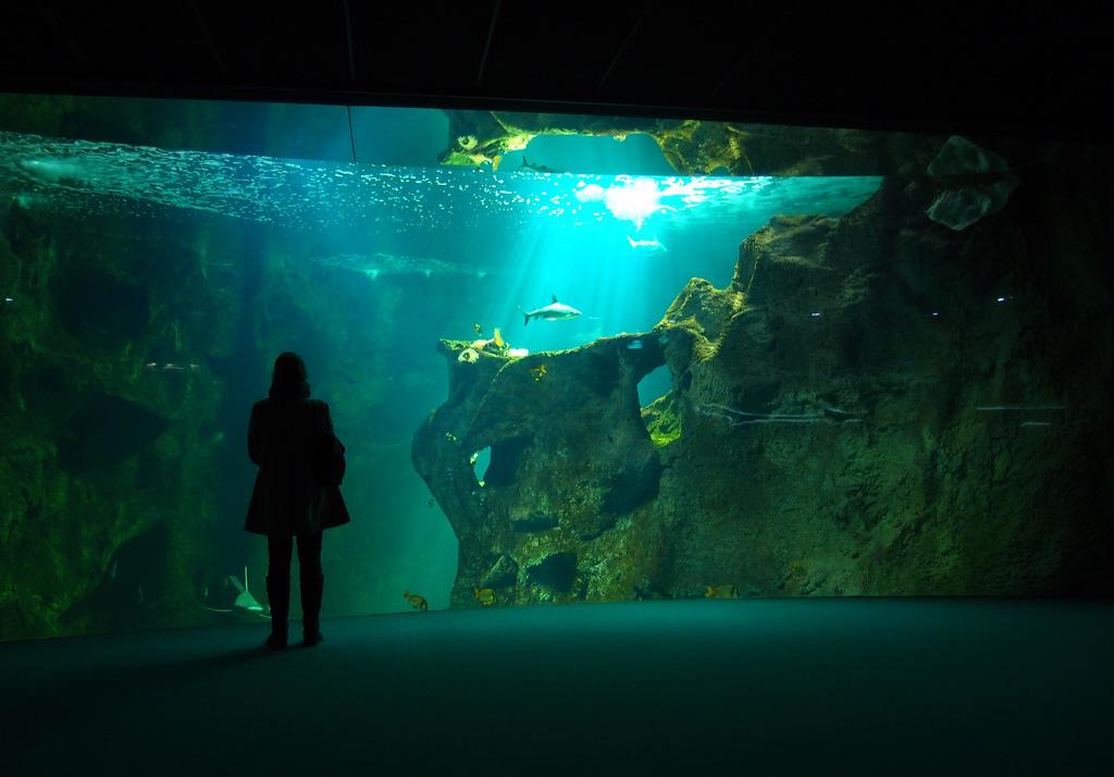 Carte Cezam Kingoland.Aquarium De La Rochelle Guide Pratique Et Tarifs