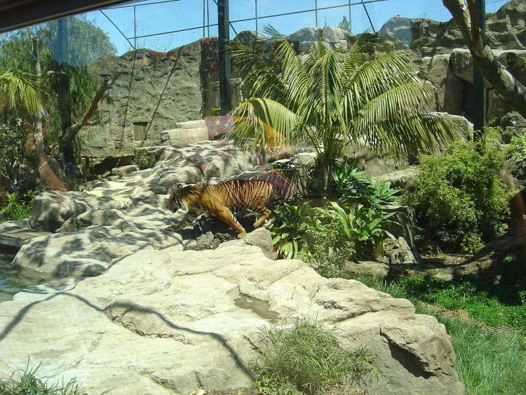 Decouverte_Nouvelle_Zelande_Auckland_Zoo