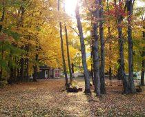 La forêt du Parc