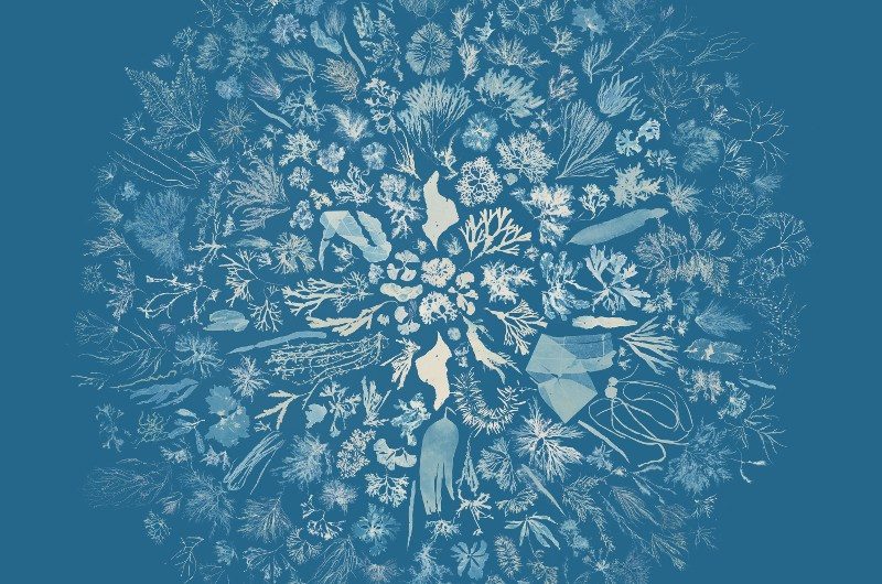 Cyanotypes & dye-painting fabric