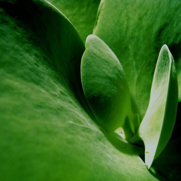 Bold green closeup of a leaf