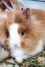 coniglietto bianco e beige