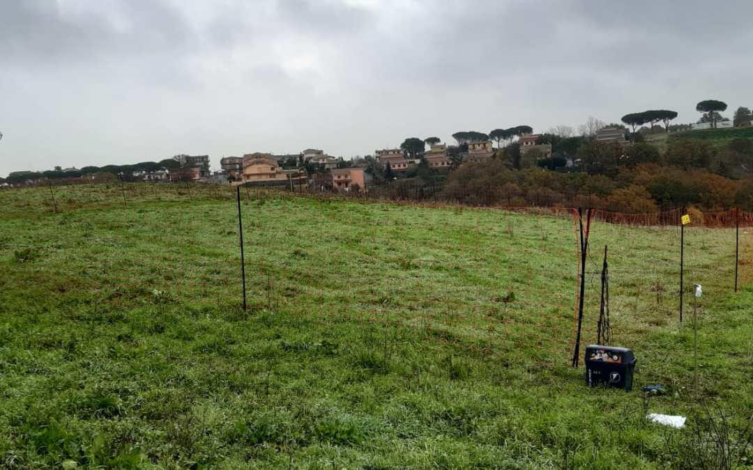 Prima recinzione anti-lupo sperimentata dal Parco di Veio