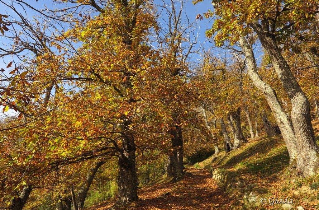 Altrove… Colori d'autunno sulla Balconata di Ormea