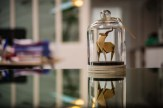 Antilope, Photo Florigami