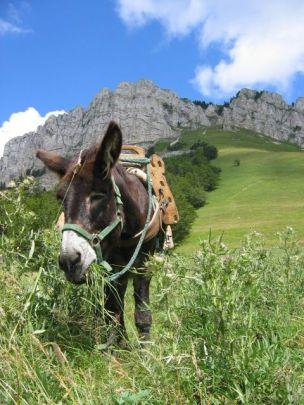 Randonnée à dos d'âne - Photo Pinterest